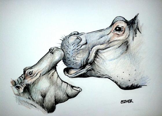 ¿Por qué los hipopótamos tienen la boca tan grande?