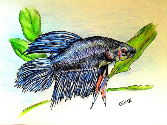 Como peces